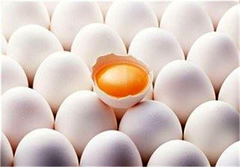 صادرات تخم مرغ نطفه دار به صورت مشروط آزاد شد
