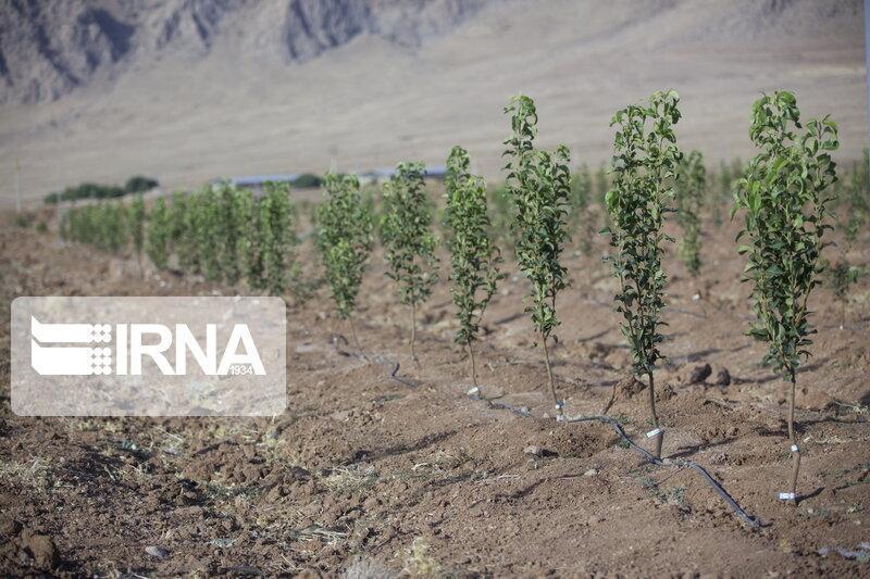 خبرنگاران تولید 190 هزار اصله نهال در نهالستان منابع طبیعی خراسان شمالی