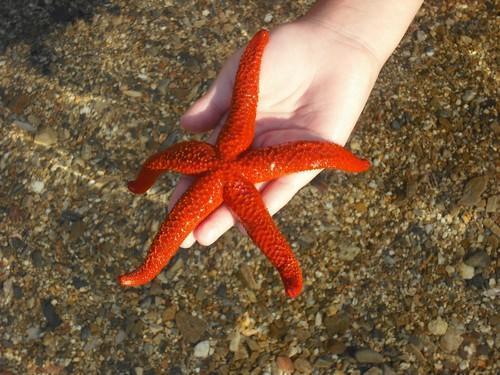 دانستنی هایی جالب درباره ستاره دریایی