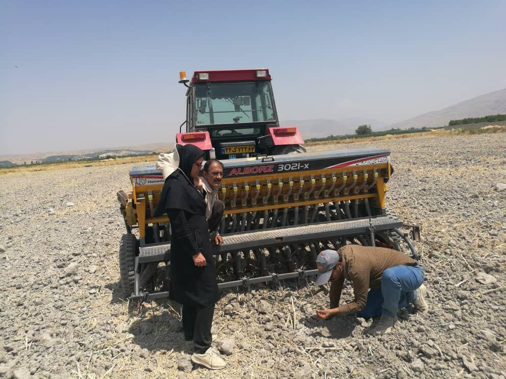 خبرنگاران کشت برنج به روش خشکه کاری برای نخستین بار در کازرون