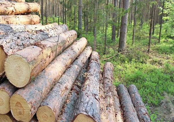 آتش سوزی و قاچاق چوب بلای جان جنگل های هیرکانی
